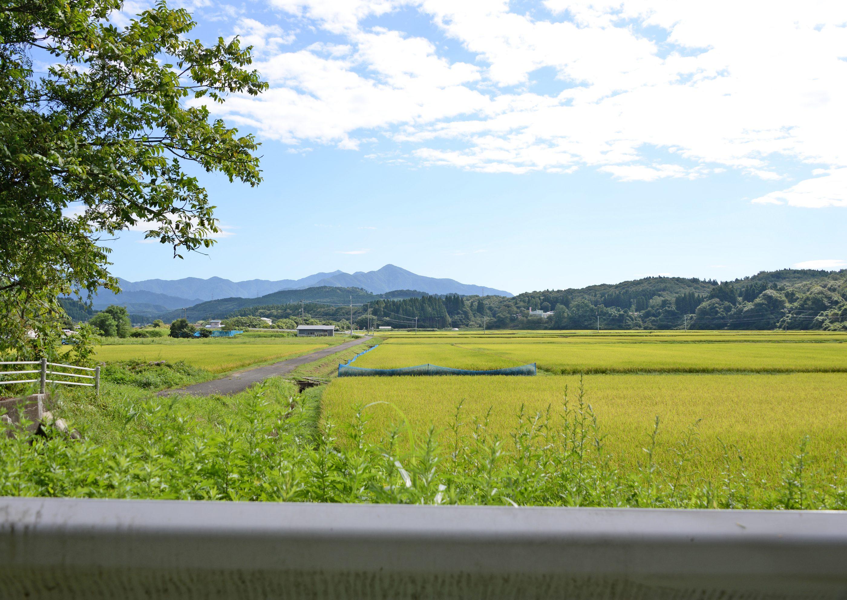 ⇑ 手形山を抜け添川の田んぼに出る直前に見る太平山。この付近には下の写真の水門がある。