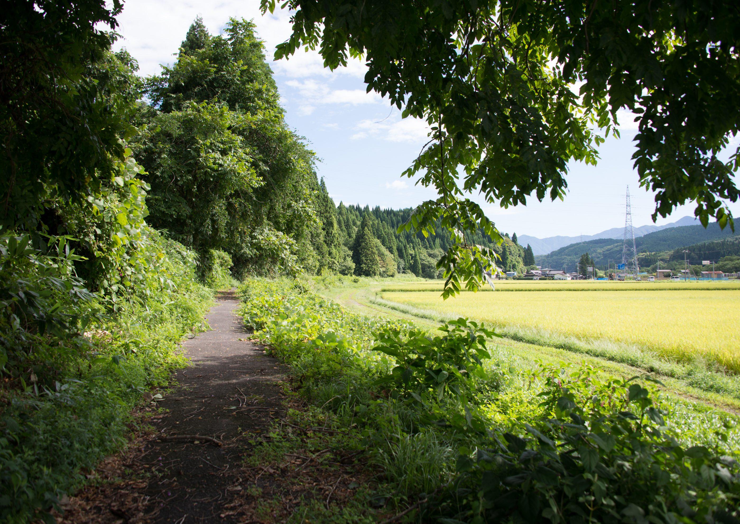 ⇑ 自転車道はこんなところです。どこからともなく蝶々が飛んできます。野鳥も沢山。
