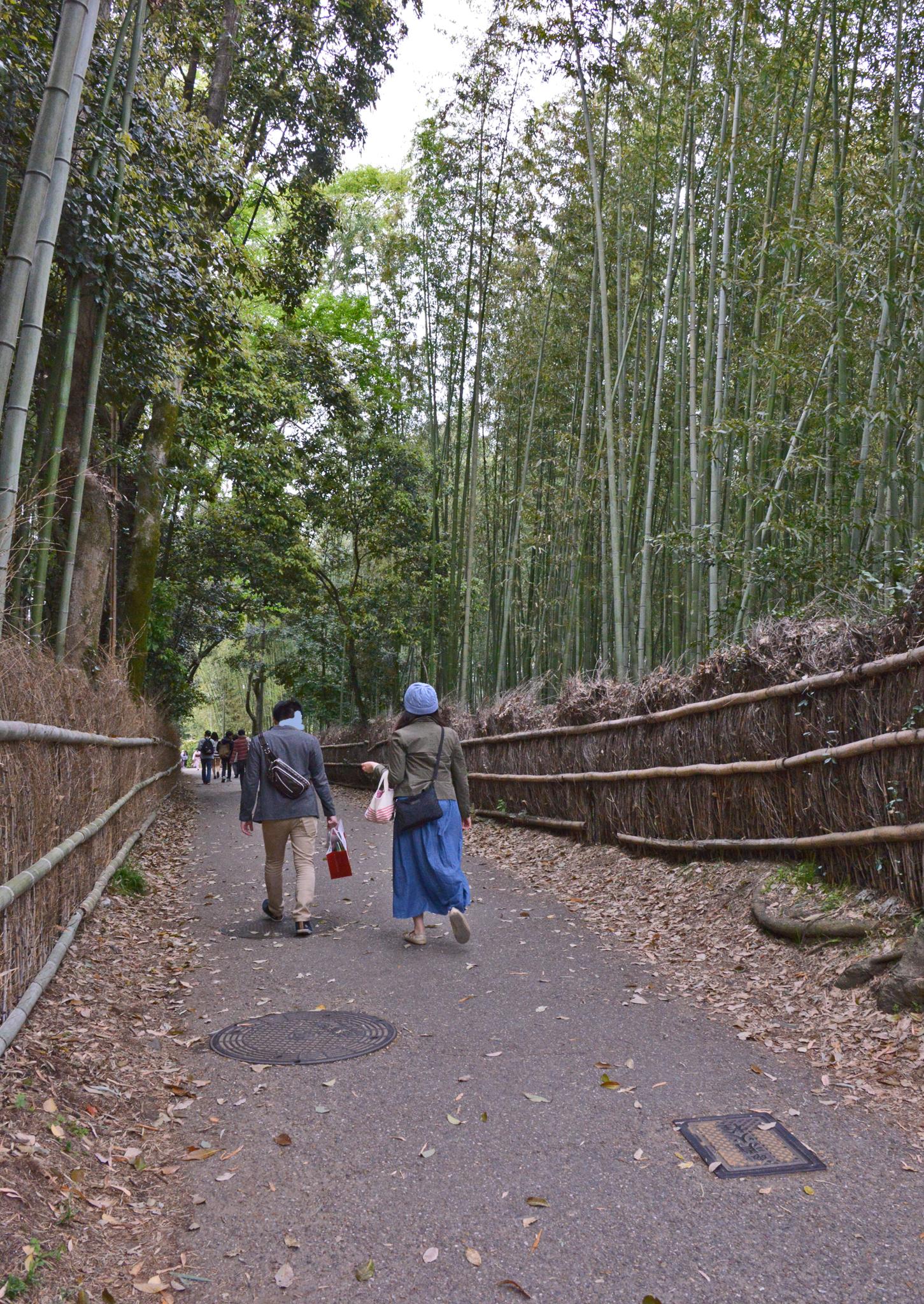 ⇑ 嵐山嵯峨野の竹林