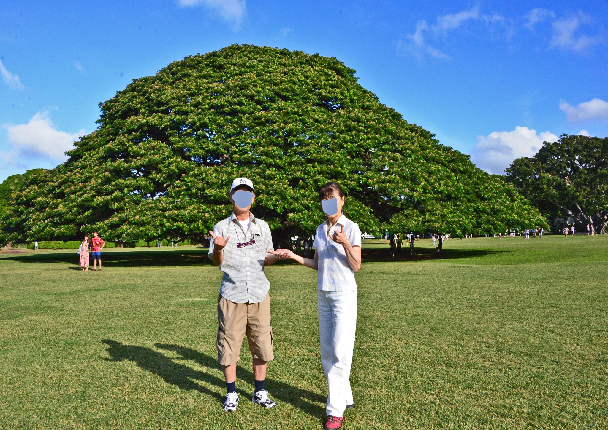 ⇑ この木なんの木 で有名な木の前で